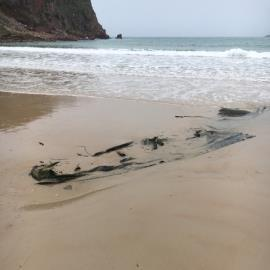 Semi submerged carpet or similar. Significant size. Been on beach most of summer. 2 seperate areas. Approx 50m from sea wall-