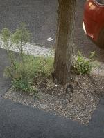 Weeds around all of the tree bases down the street looks a mess image 1-61 Janson Road, London, E15 1TE