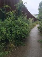 The path here is very overgrown. This was a significant area of ASB. The area looks like it has been abandoned and if the hedges are not cut back and the litter is not picked up this is likely to return to an ASB area.  -21 Thames Court Norman Place, Reading, RG1 8QT