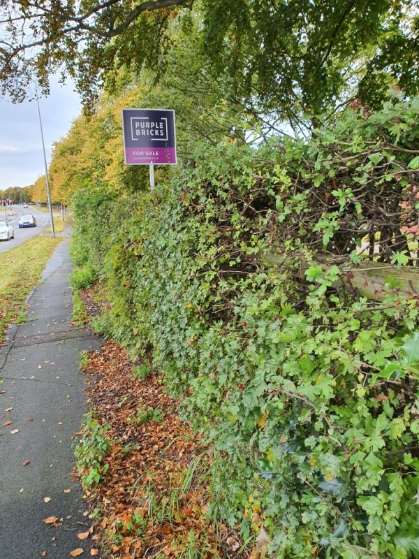Flyposting, not on owners land but in Hedge maitained by Council.-142 Liverpool Rd, Chester CH2 1AX, UK
