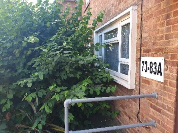 this bush is completely covering the residents windows-56 Mountfield Road, London, E6 6BJ