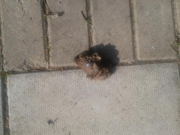 Outside 147/149. Please clear dog fouling -151 Moorside Road, Bromley, BR1 5ES
