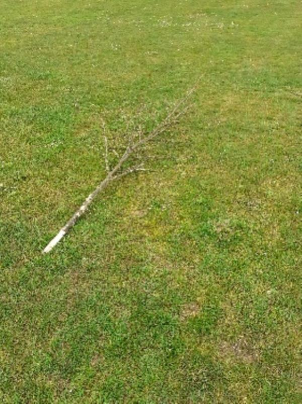 2 trees have been vandalised snapped off image 2-60 Chazey Road, Reading, RG4 7DU