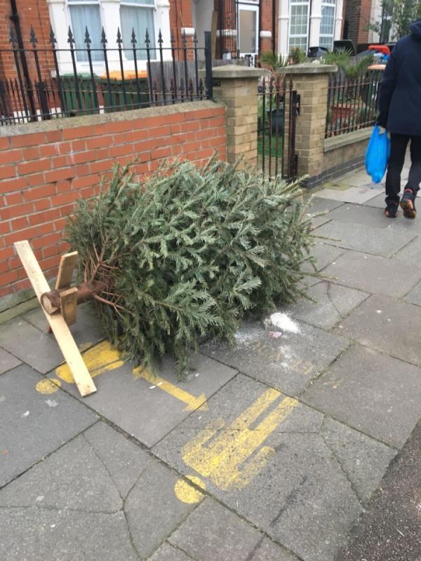 Tree-4 Norwich Road, London, E7 9JH