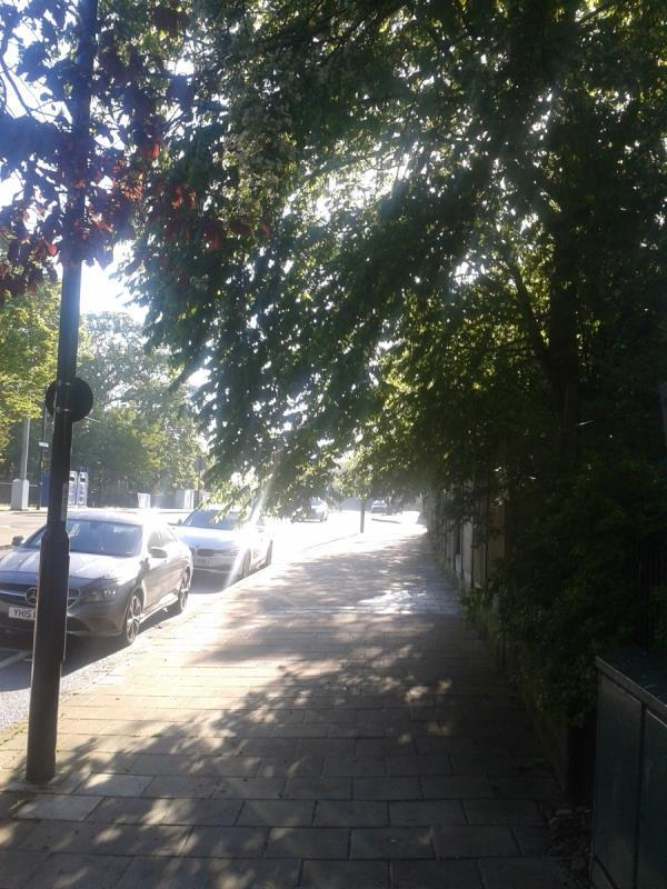 Low branches from tree in garden hanging down across the pavement in Whitefoot lane-71 Haddington Road, Bromley, BR1 5RG