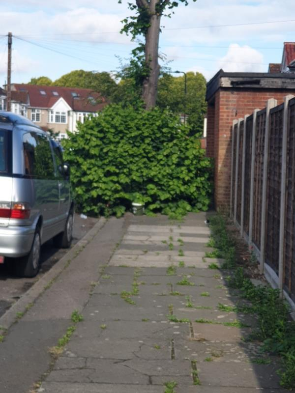 basil growth blocking the pavement -2 Evelyn Grove, London, UB1 2PS