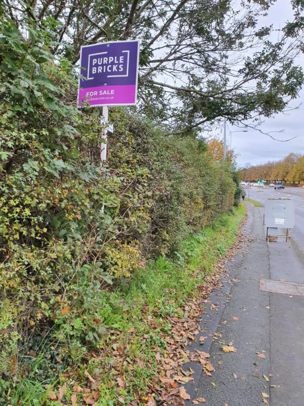 Fly posting in Hedge beside footpath.-142 Liverpool Rd, Chester CH2 1AX, UK