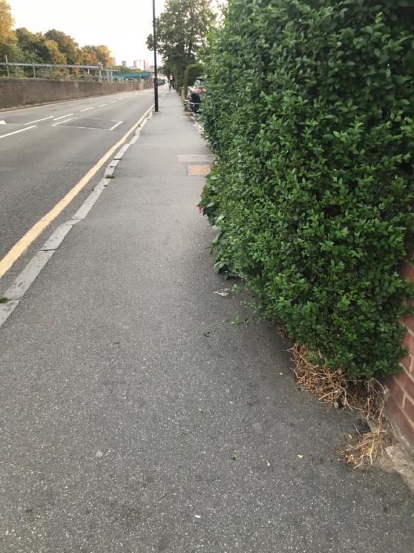 138 overgrown bush -142 Forest Lane, London, E7 9BB