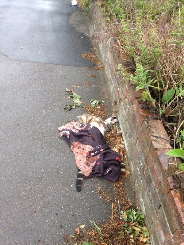 Dead cat left outside 56 Wokingham Road. On a school route. Kids did NOT appreciate having to see that in the morning -College Road, Reading RG6 1LE, UK