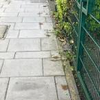 Dog fouling outside rainbow nursery -31 Nevill Road, London, N16 8SP