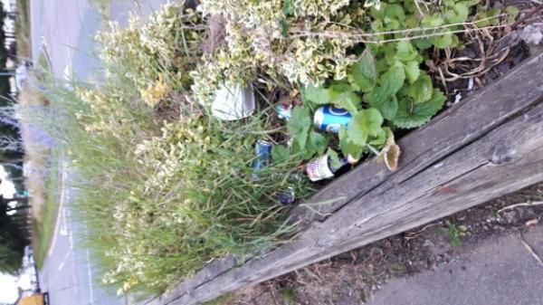 Discarded beer bottles, cans and takeaway packaging In pavement (flower) trough.-40 Glenhills Boulevard, Leicester, LE2 9BR