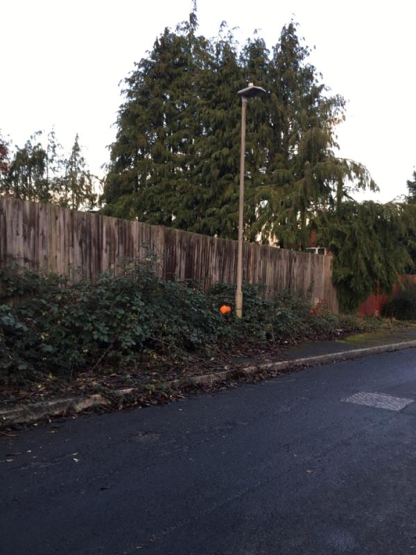 Overgrown vegetation pavement.-22 Benson Close, Reading, RG2 7LP