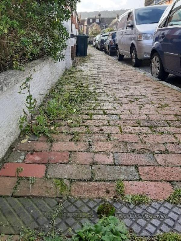 SEESL NF JN Zone2 10/10/19 @ 3pm please can you clear the weeds that are all along the public pathway on St Mary's Road, the area is looking very untidy and slippery causing potential falls and slips. many thanks Jo Nones image 2-9 St Mary's Road, Eastbourne, BN21 1QD