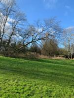 Large Tree half fallen on field hanging very dangerous as children play at the football goals -176 Renton Road, Wolverhampton, WV10 6XF