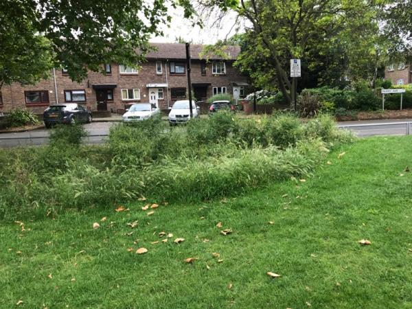 New Beckton Park. Council not cutting weeds in our parks. Smell,rubbish ,dead birds-nice job guys!!!-751a Barking Road, London, E13 9PJ