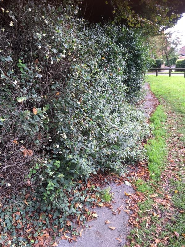 Pathway now blocked as plants not maintained on verge area-1 Hanging Gate Court Sandy Lane, Weaverham, CW8 3PN