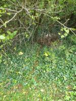There is litter that needs clearing here and also the residents who back on to this path have dumped all there old wood from the fence they replaced.  Please can council come and clear this. image 1-18 Fircroft Close, Reading, RG31 6LJ