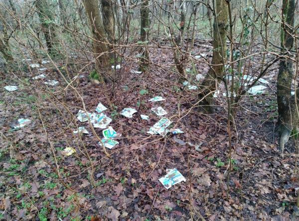 Lots of tipped leaflets, parts of old bikes and various other items have been dumped in the wooded areas on this open space-24 Rogers Close, Essington, WV11 2NW