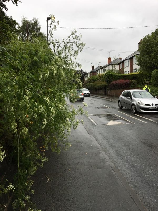 Shrubs and trees blocking the path. -13 Mill Ln, Upton, Chester CH2 1BS, UK