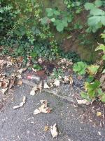 This is the second time I have reported issue and still not been dealt with.  The alleyway is very dirty and needs a full sweep, vegetation cut back and litter clearing.  Please can the council prioritise this. image 1-21 Fircroft Close, Reading, RG31 6LJ