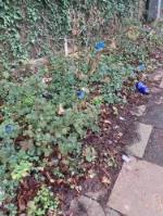 Please clear litter from grass verge image 1-23 Amblecote Road, London, SE12 9TA