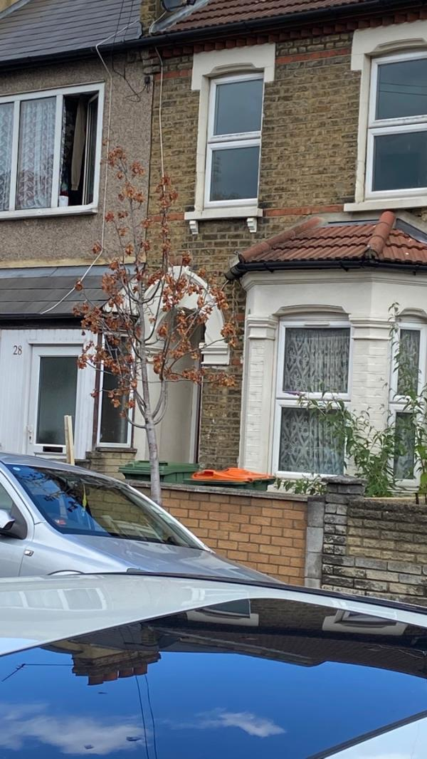 The tree is dying on the street and one has disappeared completely?   Can they be looked at / replaced?   Many thanks. -34 Friar's Road, East Ham, E6 1LL