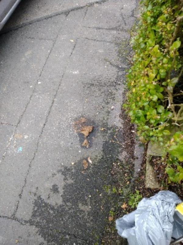 Human waste on pathway. I have clean it up as best I can but could do with path cleaned with water/detergent -104 Linden Road, Reading, RG2 7EH