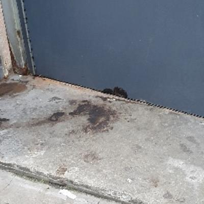 dog dropping to be cleaned on Acton Mews -5-6b Lee Street, London, E8 4DY