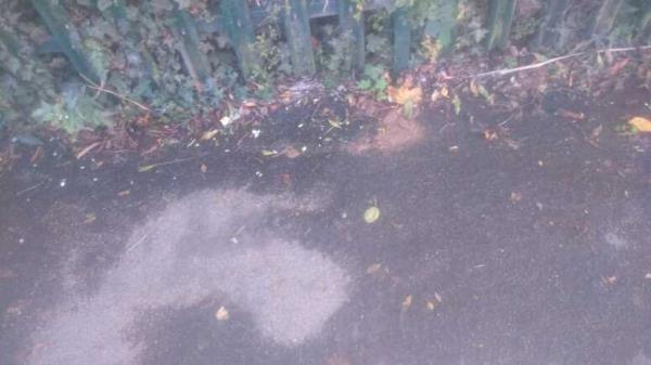 dog faeces on the pavement -6 Rossington Place, Reading, RG2 8RQ