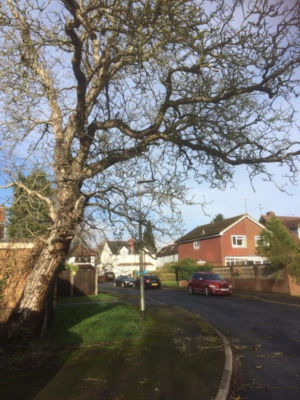 Old rotting walnut tree, lots of debris on pavement and road, risk of falling.  tree felled.-6 Tyler Close, Reading, RG4 7JQ