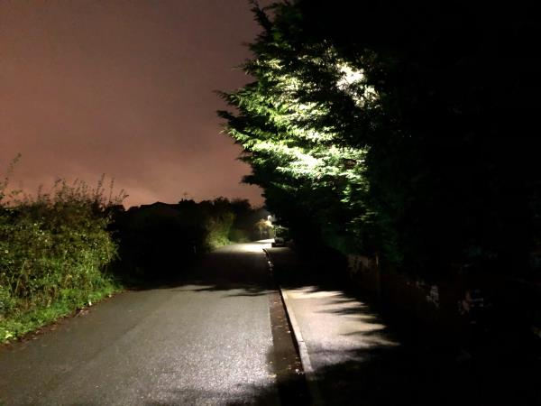 Street lamp obscured by trees in Bachelors Lane- this issue reported 2016/2017. Also same issue multiple locations in Great Boughton.-2 Bachelors Lane, Chester, CH3 5XF
