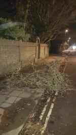A tree has fallen in the gale force winds that we had on Saturday 2nd November 2019 it is blocking the footpath and sticking out on to the road as well image 1-129a Rowlands Road, Worthing, BN11 3LD