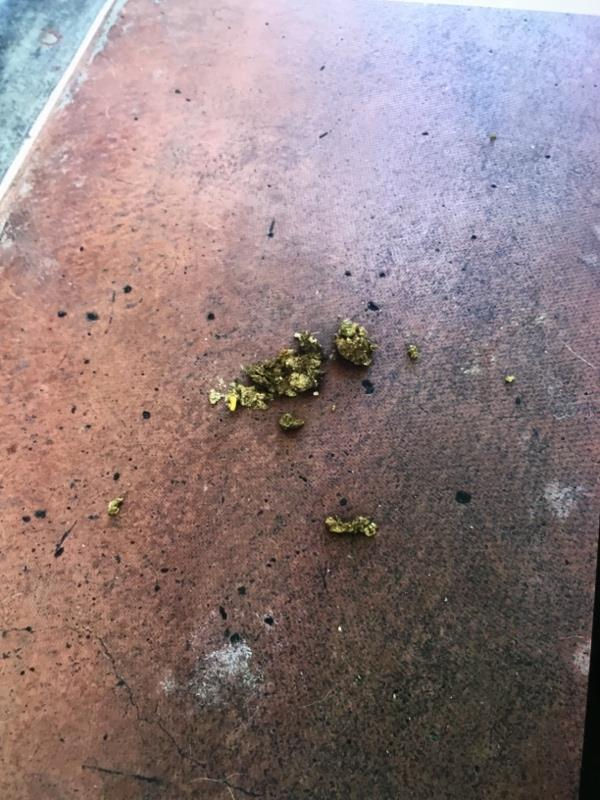 Dog muck daily in the stairwell of the block 2-24 Ottawa road . Either on landings , in communal stairwell or outside main doors. Four dogs in block so one of these doing it . 2 flats involved -86 Ottawa Road, Leicester, LE1 2EJ