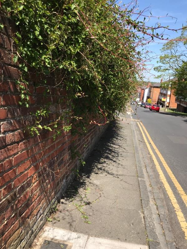 Entire path unusable because of overgrown trees -Branksome Court, Prospect St, Reading RG1 7XR, UK