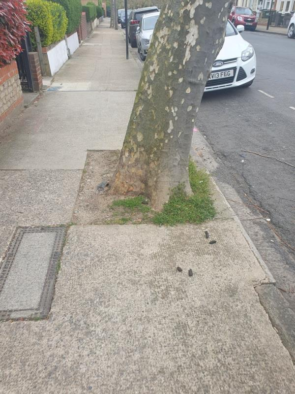 Dog mess on pavement at base of tree outside of number 137 and 139-137 HENNIKER, East Ham, E6 3HT