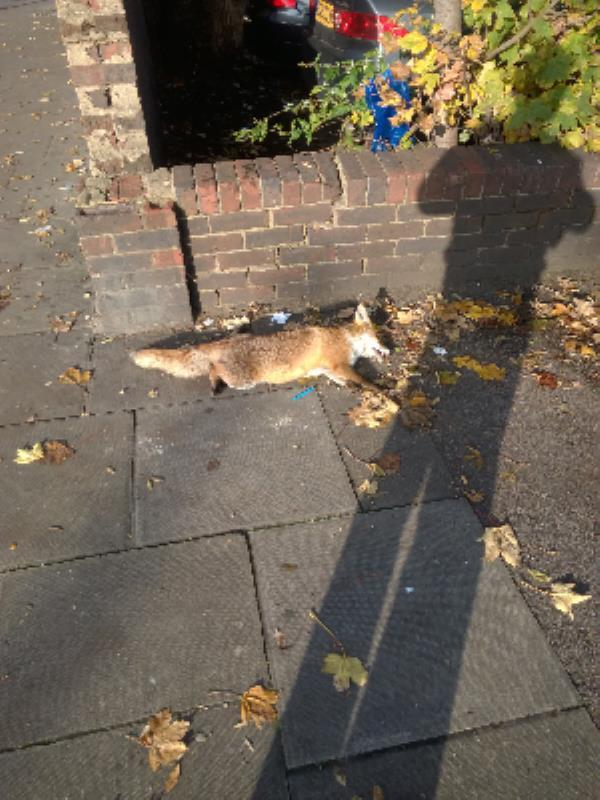 dead fox at junction with Umbriel Place e13-97 High Street, London, E13 0AD