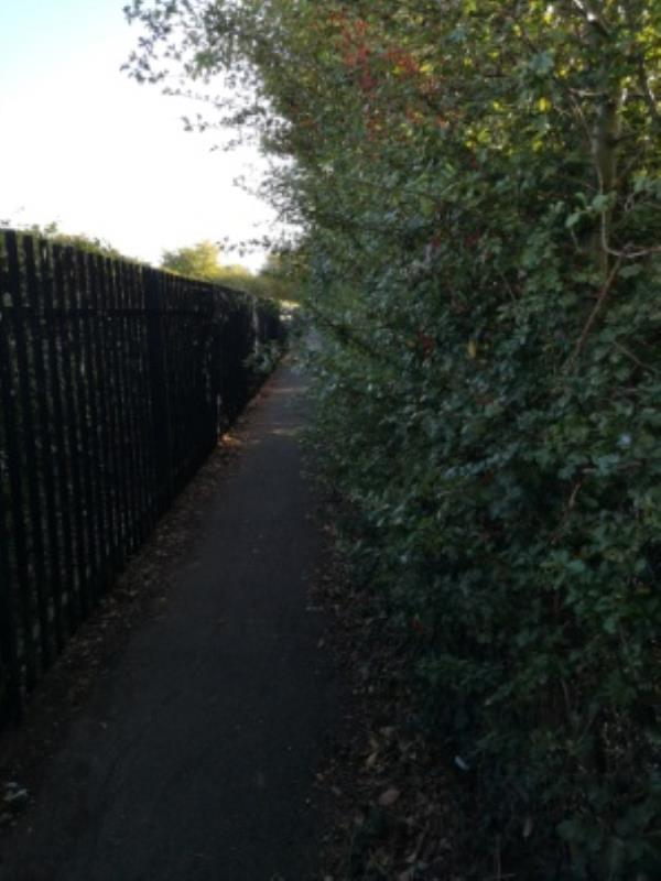 overgrown plants overtaking path to primary school and pre school.-17 Orchard Grove, Reading, RG4 6NF