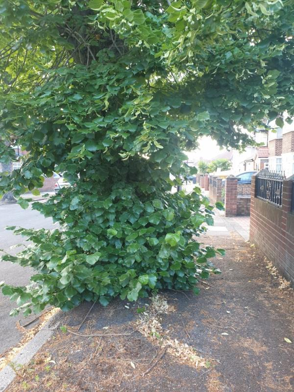 over growth basil by tree base blocking pavement -45 Argyll Avenue, London, UB1 3AT
