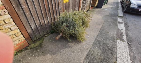 Christmas tree - Beechfield Road near jw Stansted Road -1 Beechfield Road, London, SE6 4XB