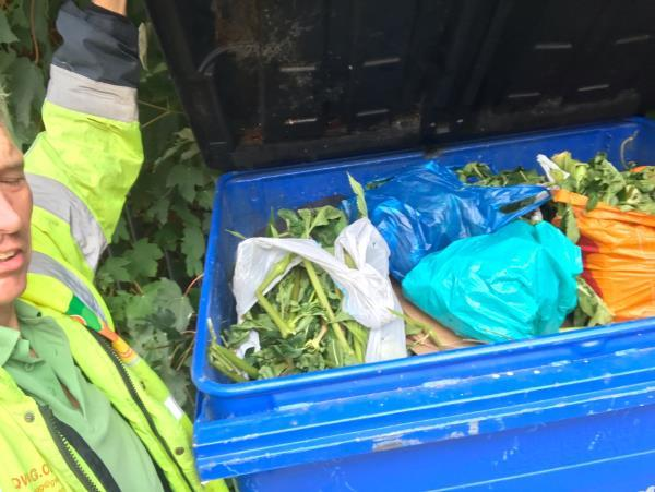 LanqQ manage the embankment rarely. I have gone in to remove as much #Himalayanbalsam as I could see both sides. Also stem injected 10 stalks of Japanese Knotweed. Arisings have gone into Lewisham palladin 1100l bins as nowhere else to go. Total value bin of work done (money saved by LandQ is £500-£1000!). I shall email serepairs@lqgroup.org.uk. Woman ran out to tell me off for loading bins so I explained. Good for her!  image 2-2 Smead Way, London, SE13 7GE