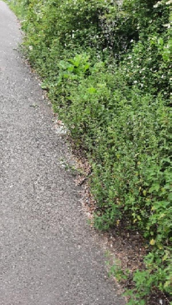 litter along edge of footpath/ cycleway down to underpass -Reading Relief Road, Reading, RG2 0SF