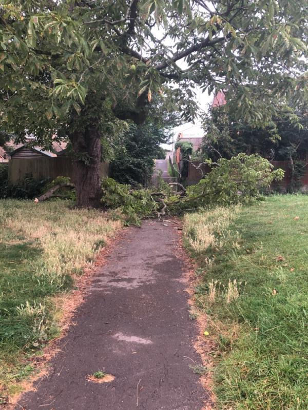 Branch has fallen and blocking pathways-24 Hadleigh Rise, Reading, RG4 6RW