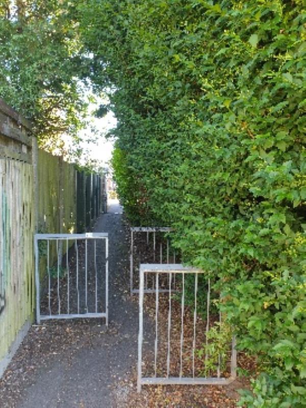hedge overgrown in alley between 40/41 cherry wood green.-102 Green Park Drive, Bilston, WV14 6HA