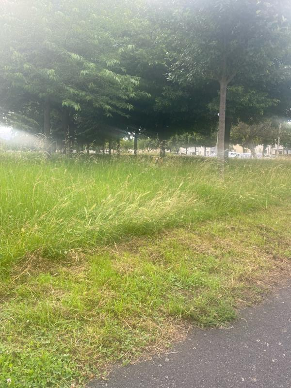Extremely long grass. Looks horrendous can't walk along the grass. Dangerous area. Lots of litter and glass in the long grass. Unsightly from the main round. A complete eyesore. -101 Glenhills Boulevard, Leicester, LE2 8UG