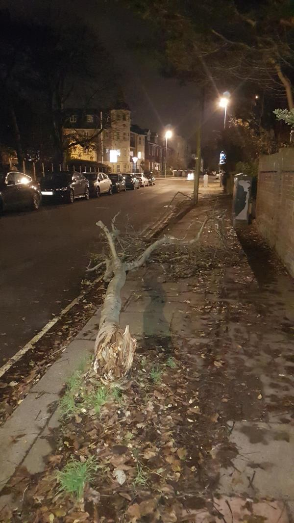 A tree has fallen in the gale force winds that we had on Saturday 2nd November 2019 it is blocking the footpath and sticking out on to the road as well-129a Rowlands Road, Worthing, BN11 3LD