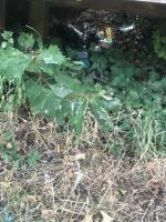 Numerous glad lager bottles and beer cans . Location Forest Lane Park, under large pond wooden tree house, area  needs a more thorough clean under the slide and srub areas👎🏽 dangerous for kiddies  image 1-77 Magpie Close, London, E7 9DE
