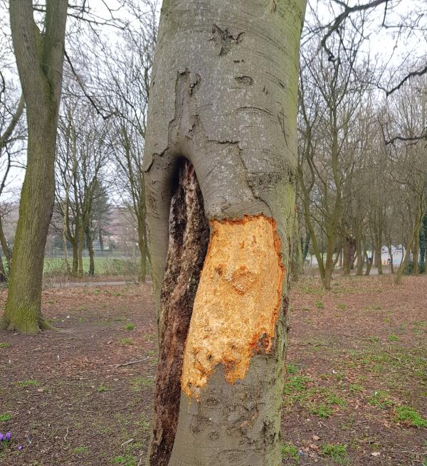 CRIMINAL DAMAGE BY YOUTHS SUNDAY 28th Feb! RIPPED OFF BARK AND INSCRIBING NAMES AND PATTERNS INTO THE TREE USING STONES RIPPED AWAY FROM THE WALL ON FOSSE ROAD NORTH SIDE. NOTICES NEED TO BE PUT UP TO ADVISE THIS IS CRIM INAL DAMAGE.-17 Wentworth Road, Leicester, LE3 9DF