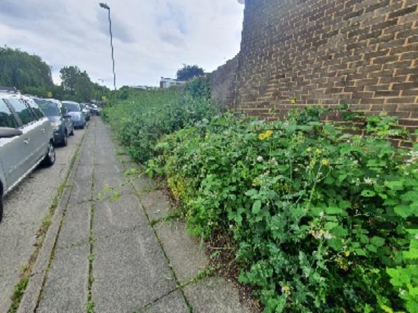 long plant with thorn has over grown and affecting people to walk on pavement. specially on school time where childrens were walking. Also common nettle has over grown and made difficult to walk.-105 AUSTEN, Farnborough, GU14 8LQ
