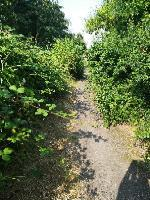 Customer reporting shrubs and nettles encroaching onto the path on Weddell Wynd Open Space on the path at junction with Peter Avenue  image 1-51 Peter Avenue, Bilston, WV14 8UJ
