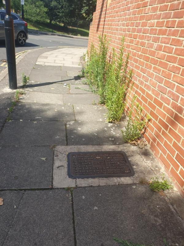 weeds very high, roads either side deep cleansed but Knowskey Avenue in a bad way-1 Knowsley Avenue, London, UB1 3AX